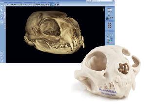 解剖学软件