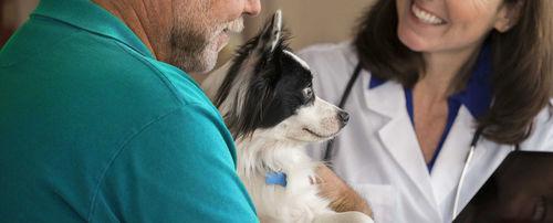 医疗管理软件 / 培训 / 兽用 / 用于兽医诊所