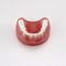 假牙解剖模型PE-PRO020Nissin Dental Products Inc.